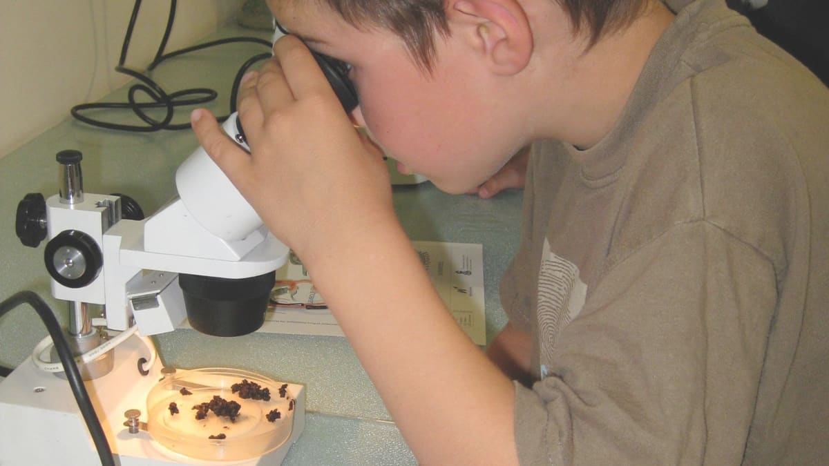 Best Microscope for Kids to Choose from