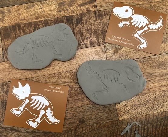 Completed dino fossils from a Koala Crate set