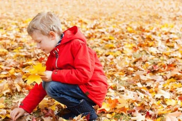 Child picking up fall leaves